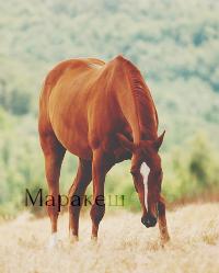Маракеш