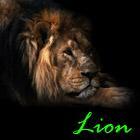 Lion357