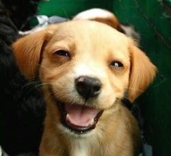 smile4you