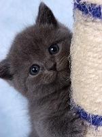 Котёнок Эрл