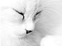 ♥Призрачная Кошка♥