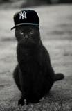 BlackyCat