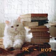 PR - кот