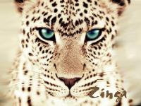 Zinga