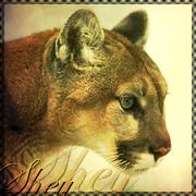 Sheyron