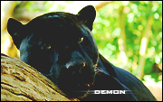 `demon