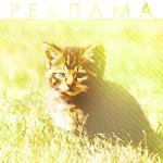 Рекламный Кот