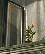 Цветок Цветочный