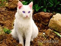 Снежинка Х