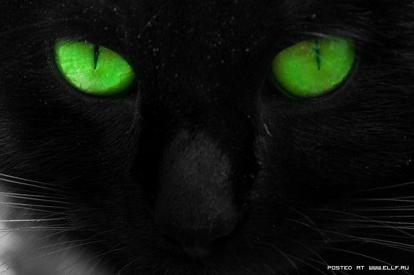 Чёрная Смерть