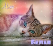 Билан
