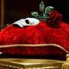 Rose de l'Opera