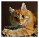 Немартовский кот