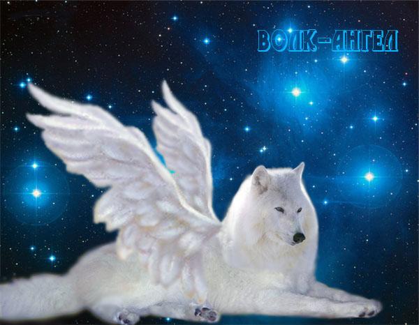 Волк Ангел