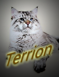 Террион