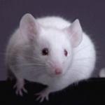 mouseg