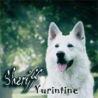Sheriff Yurintine