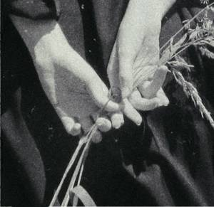 Хвойнолапа