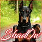 Shad0w
