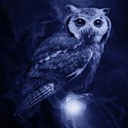 Post Owl