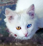 Белыш