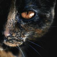 Черная Омела [x]