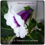 Ирина-цветы НСК