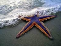 zvezda1221