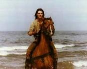 Wind - war horse
