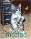 muzfan
