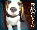 Beagle*Romantic