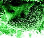 Зеленый черт