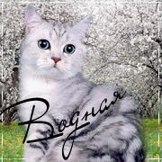 http://catsswarriorssclanss.spybb.ru/img/avatars/0004/c3/fc/1247-1300550246.png