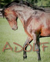 Adol`f