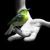 Птаха
