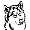 Mingo-Dog 2