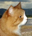 sherwoodcat