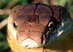 Змей Подколодный