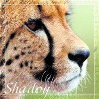 Shadoy