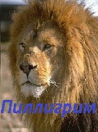 http://newlewking.mybb.ru/img/avatars/000b/2c/33/137-1410891703.jpg
