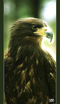 http://newlewking.mybb.ru/img/avatars/000b/2c/33/38-1258145093.jpg