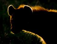 http://newlewking.mybb.ru/img/avatars/000b/2c/33/771-1410195090.jpg