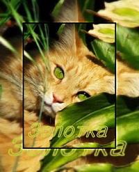 http://catswarriorsthesecret.rolka.su/img/avatars/000b/5d/60/11-1266866801.jpg