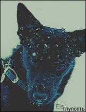 http://dogsofberlin.7bb.ru/img/avatars/000b/60/df/3-1262786937.png
