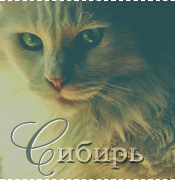 http://warriorscats.1bb.ru/img/avatars/000b/ad/25/552-1357676940.png