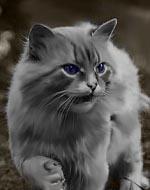 http://catswarrr.spybb.ru/img/avatars/000c/b4/8c/12-1273393769.jpg