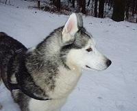 http://heartsofdogs.rolka.su/img/avatars/000f/72/0e/200-1370590378.jpg