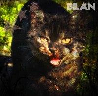 http://catswarriorsnewstart.mybb.ru/img/avatars/0010/d5/bf/506-1405765379.jpg