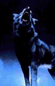 http://wolfblood.rolbb.ru/img/avatars/0012/32/ee/345-1387482395.jpg