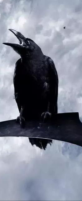 Aлександр Орел